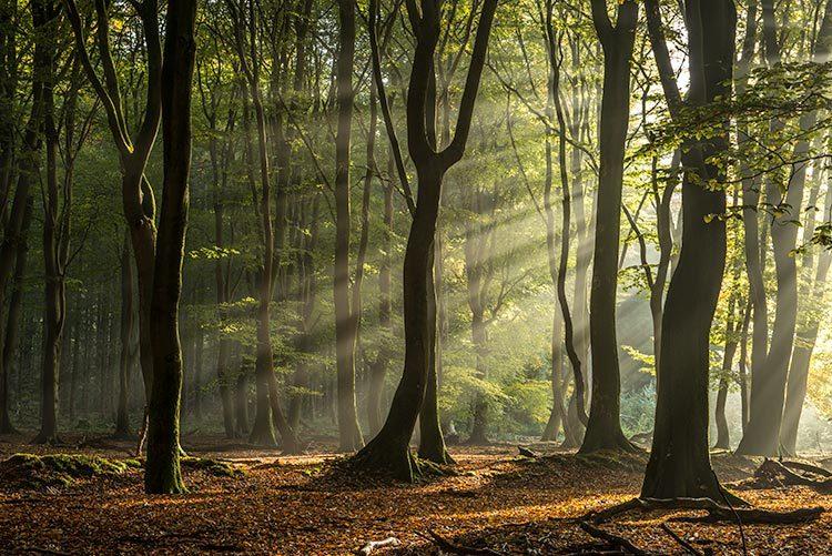 Herfstochtend in het Speulderbos
